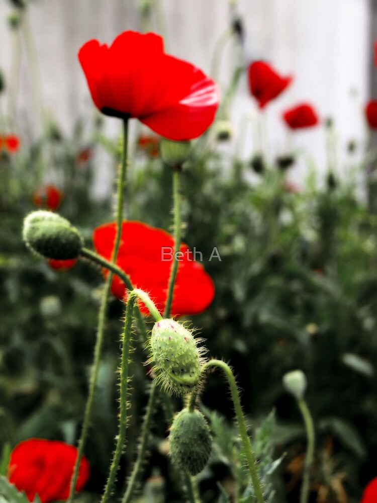 Fleurs des Champs by Beth A