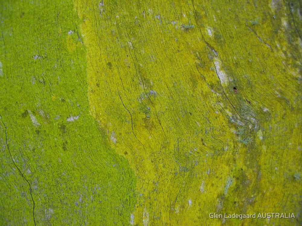 Study in Lime by Glen Ladegaard AUSTRALIA