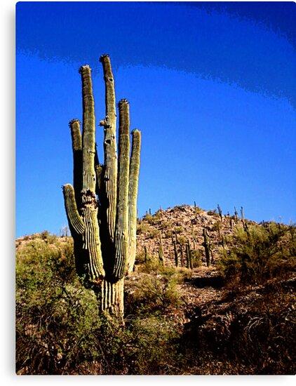 The Cactus King by MissJack