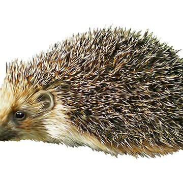Hedgehog by TOMSREDBUBBLE