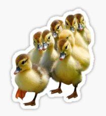 Ducklings! Sticker