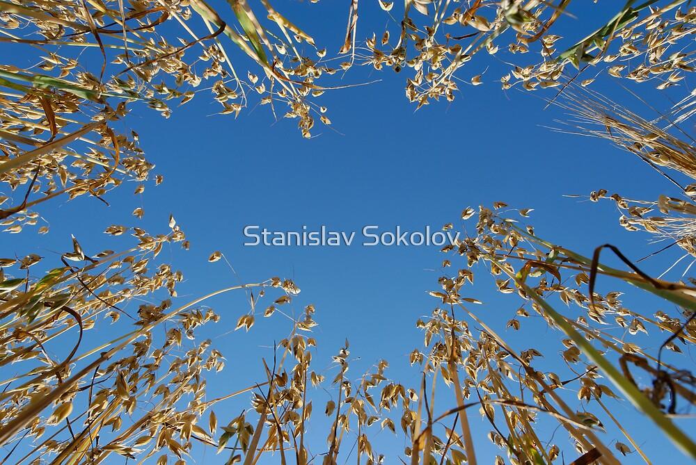 Oats from Below  by Stanislav Sokolov