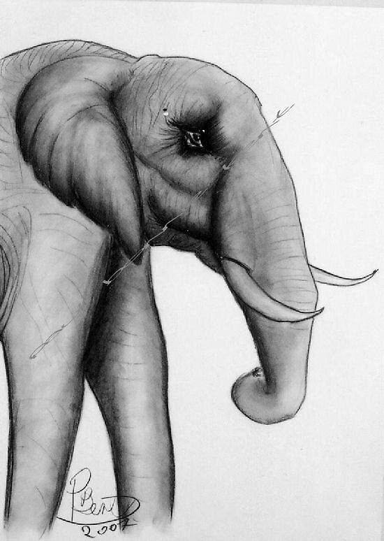 Elephant by Paul Bonnie Kent