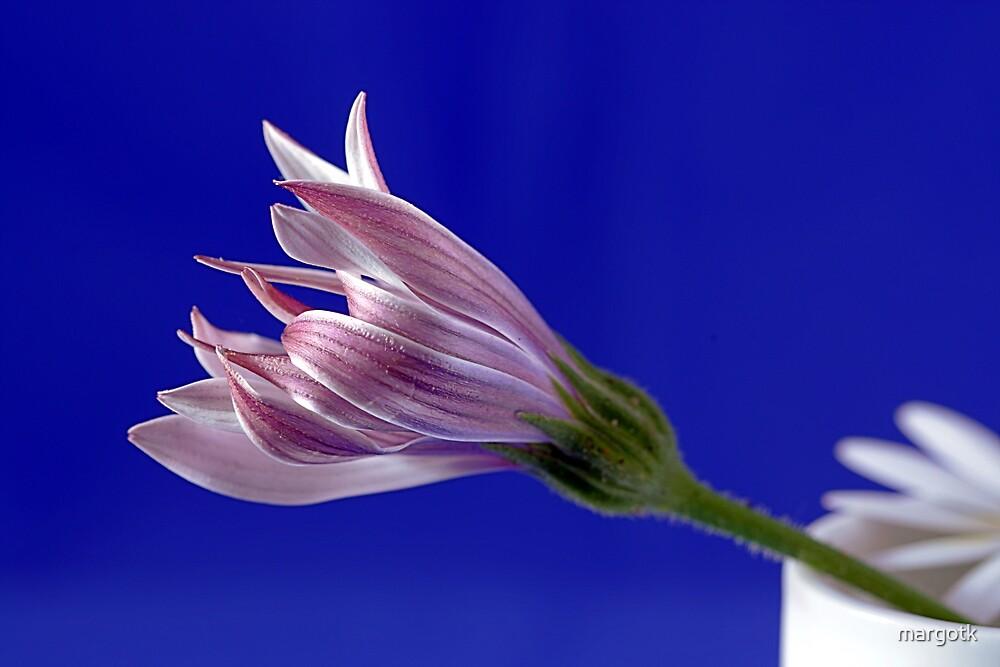 Emerging Flower by margotk