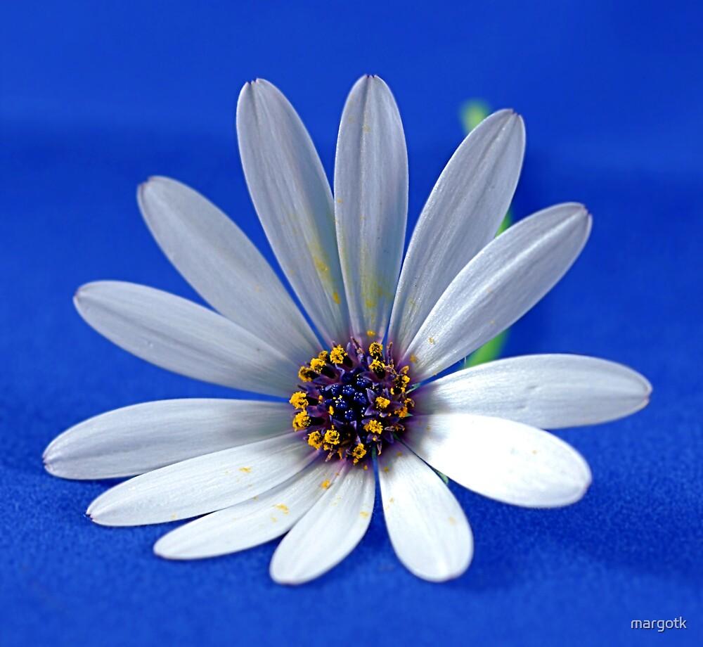 White Flower by margotk