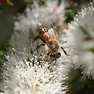 Bee July 2010 by saharabelle