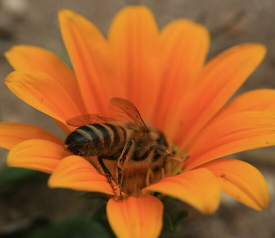 Bee August 2011 by saharabelle