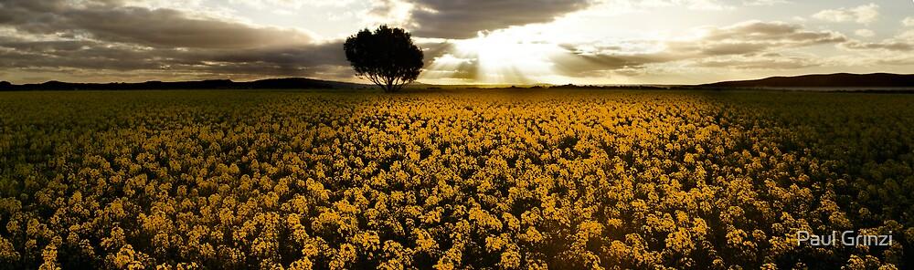 Crops of gold by Paul Grinzi