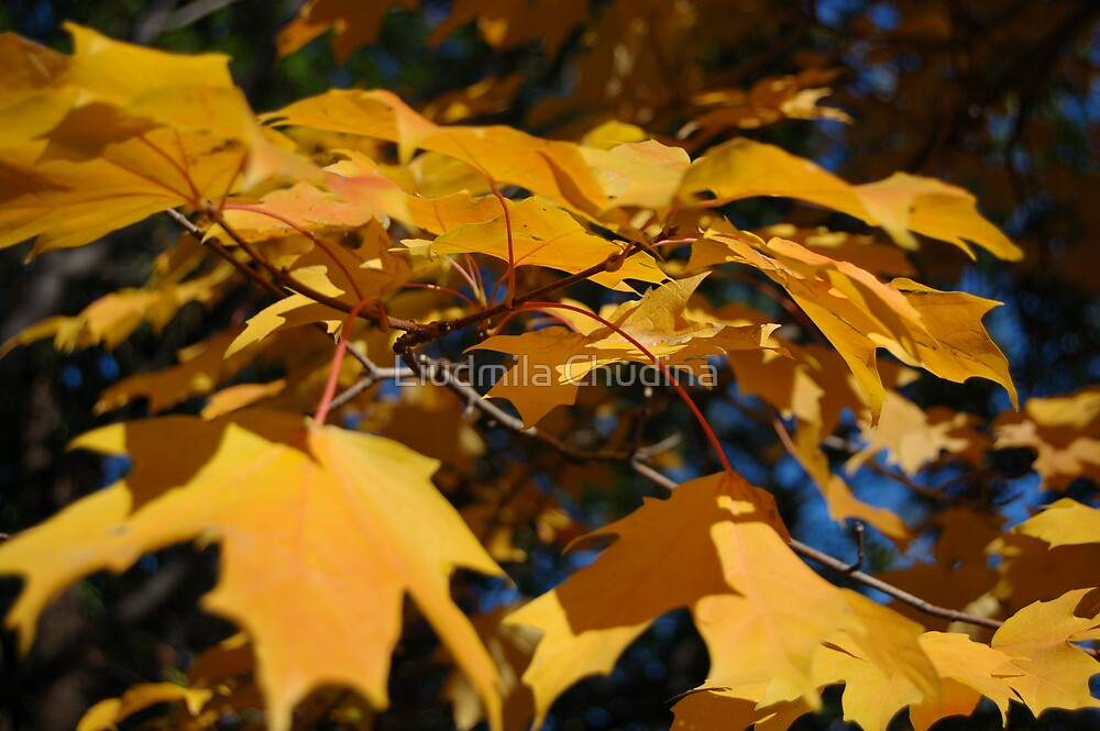 Yellow Fall by MiLa