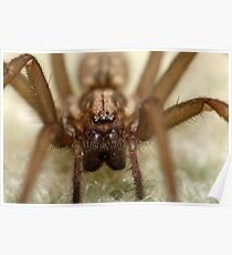 Wolf Spider Extreme   Poster