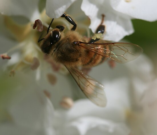 Bee October 2011 by saharabelle