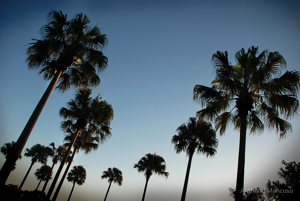 the palms by Anthony Mancuso