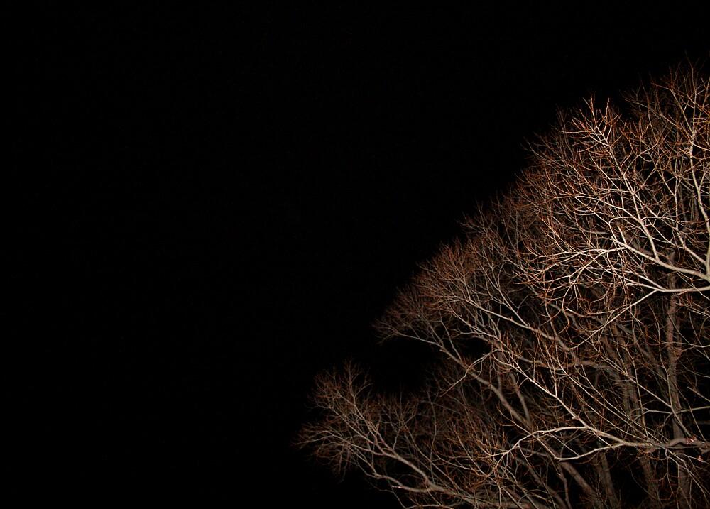Night time by Kala Lampard