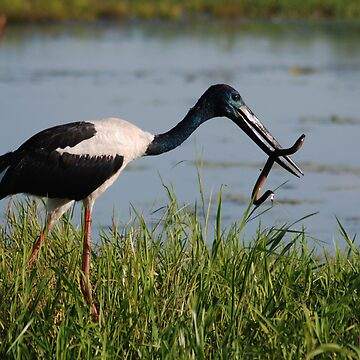 Jabiru Lunch by mARTyImages