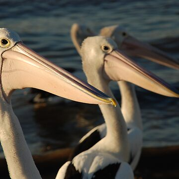 Pelican Gathering by mARTyImages