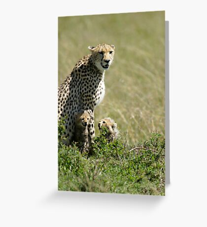 Cheetah mother and two cubs Greeting Card