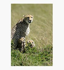Cheetah mother and two cubs Photographic Print