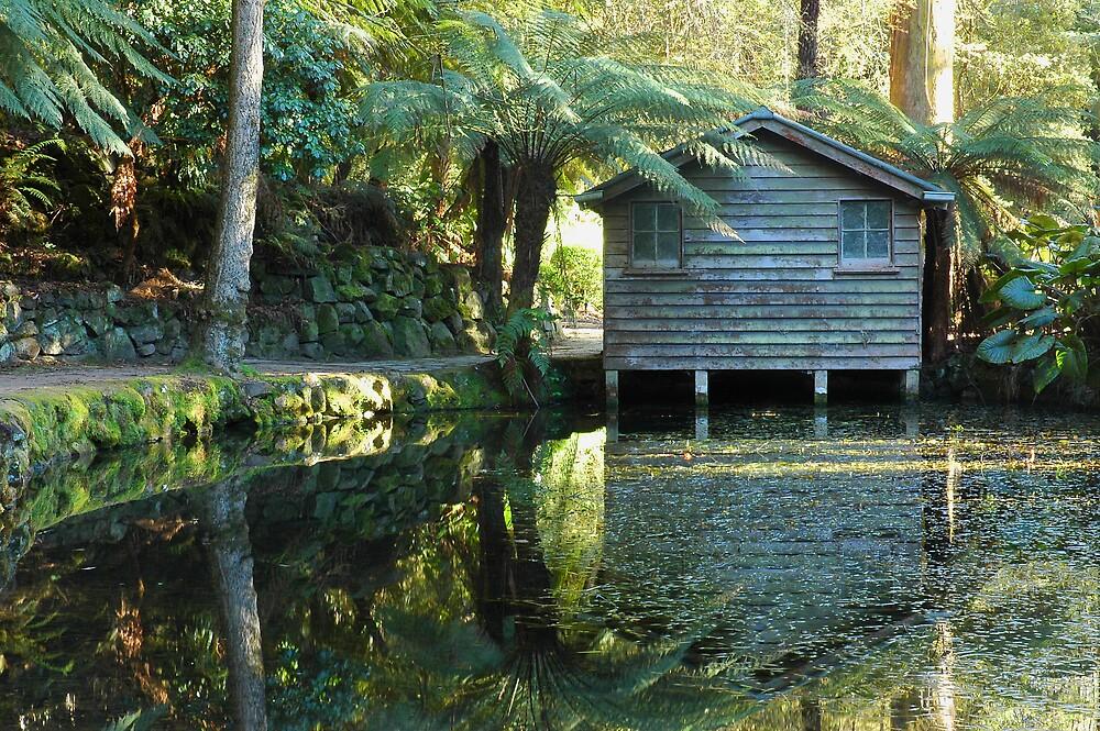 Alfred Nicholas Gardens, Dandenong Ranges. by Roger Olasiman