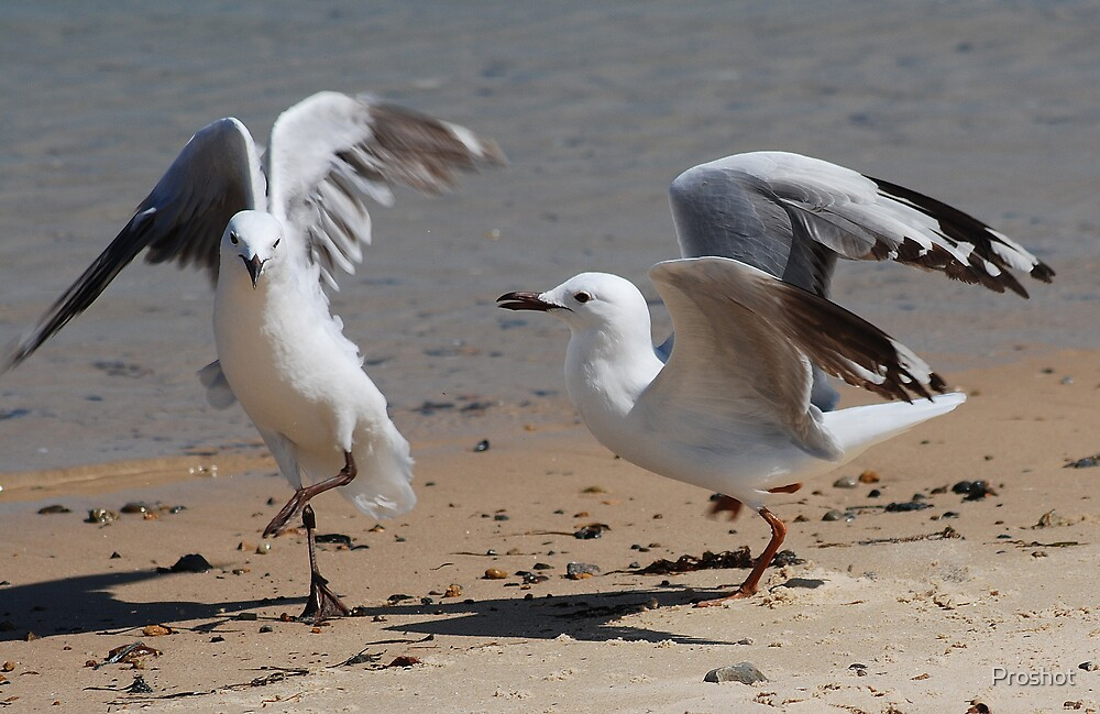 Seagull Dance by Proshot