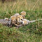 One happy cheetah family: Sita and cubs by Yves Roumazeilles