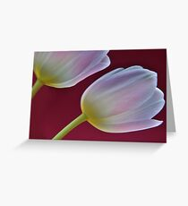 Two pink tulips Greeting Card