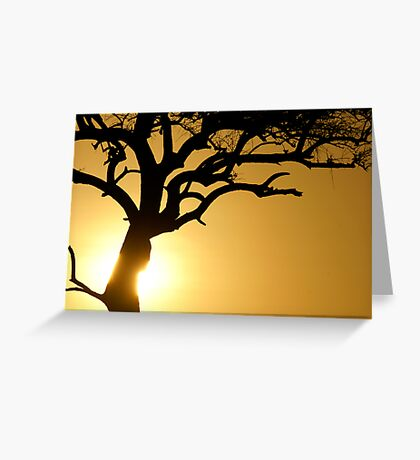 Sun on the tree trunk Greeting Card