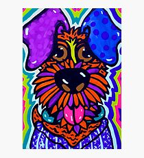 Floyd Dog Design Airedale Sealyham Wheaton Terrier Lakeland Irish Schnauzer Scottish  Photographic Print