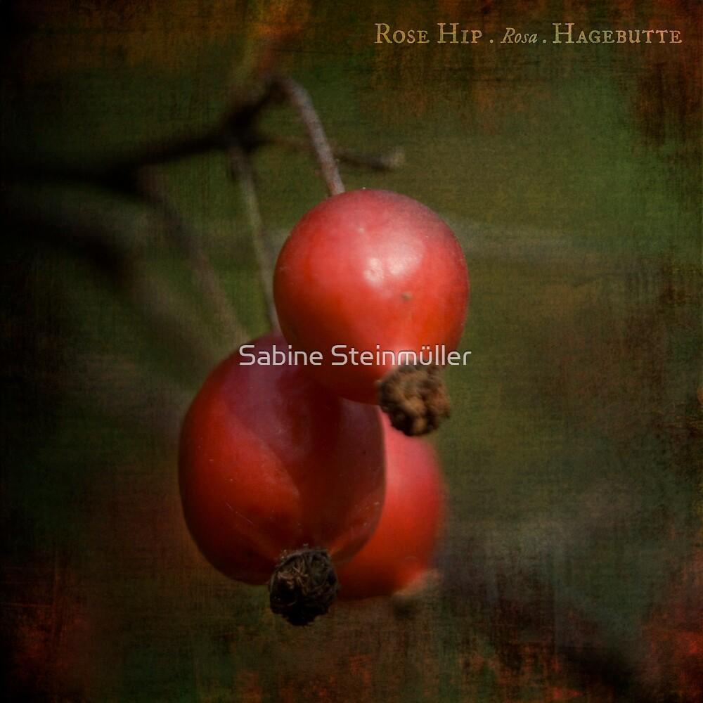 rose hip. by Sabine Steinmüller
