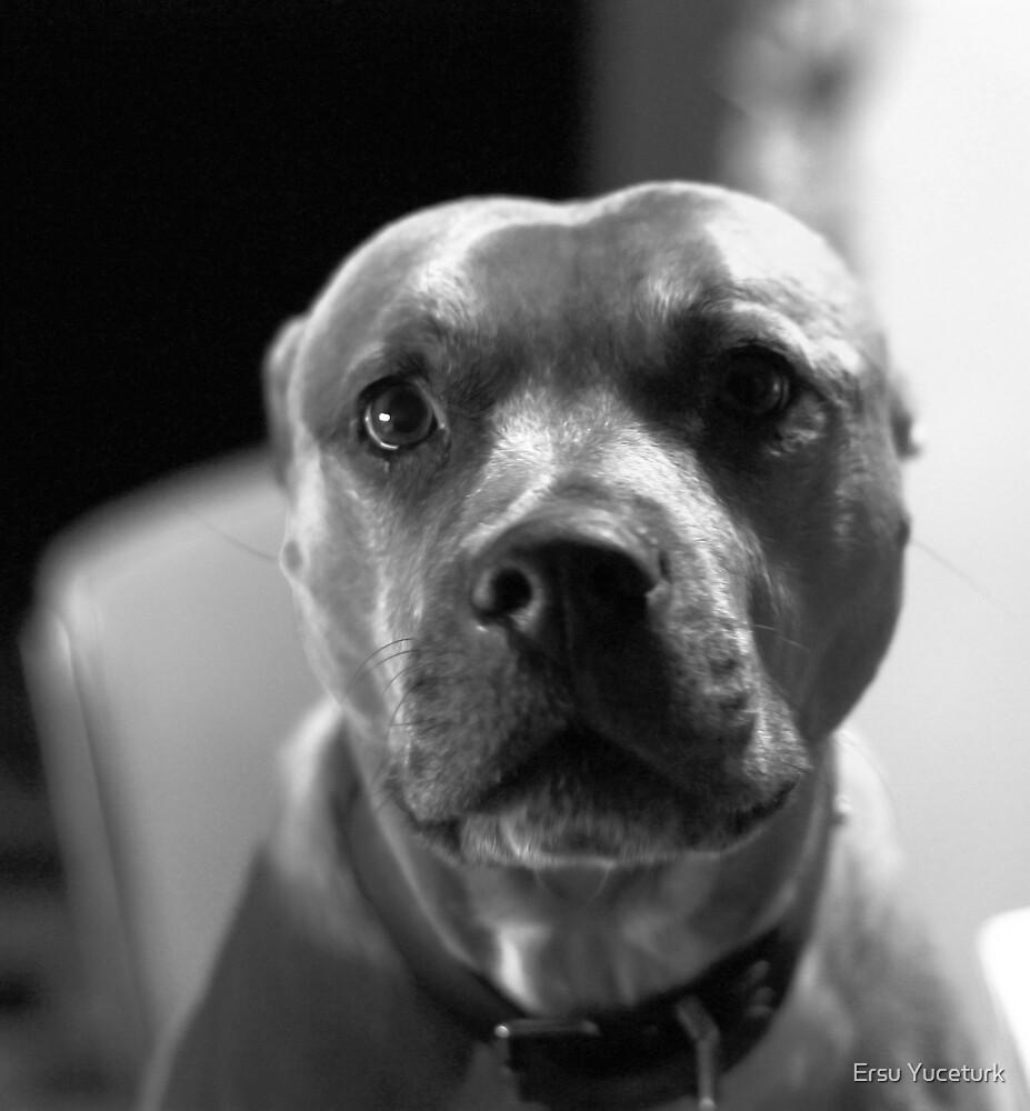 Kitchen Guard Dog by Ersu Yuceturk