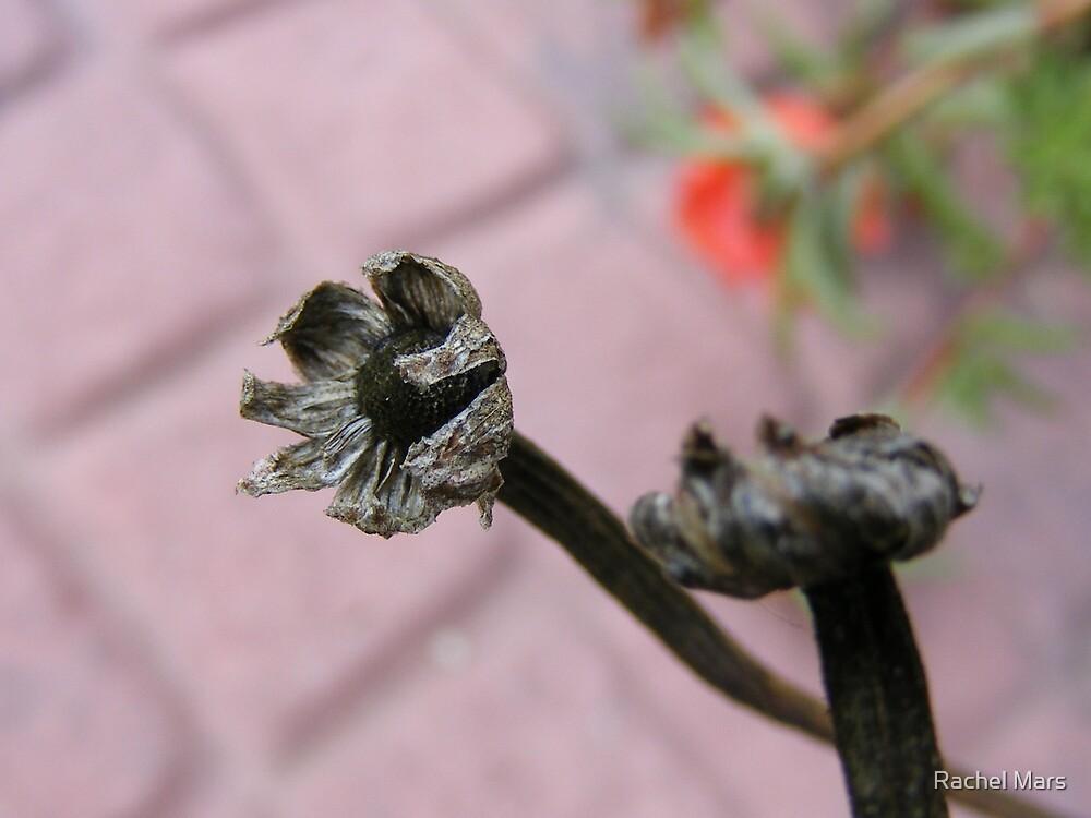 Dead Flowers by Rachel Mars