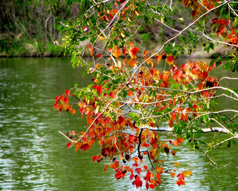 Autumn Leaves by DottieDees