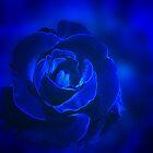 Rose in Blue by Sandy Keeton