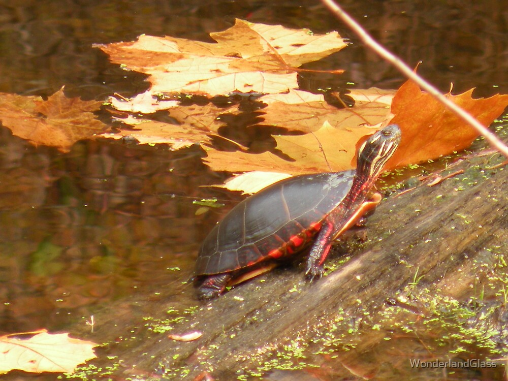 how about a nice red slider? by WonderlandGlass