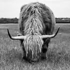 Scottish Highland Cow in BnW by susanzentay
