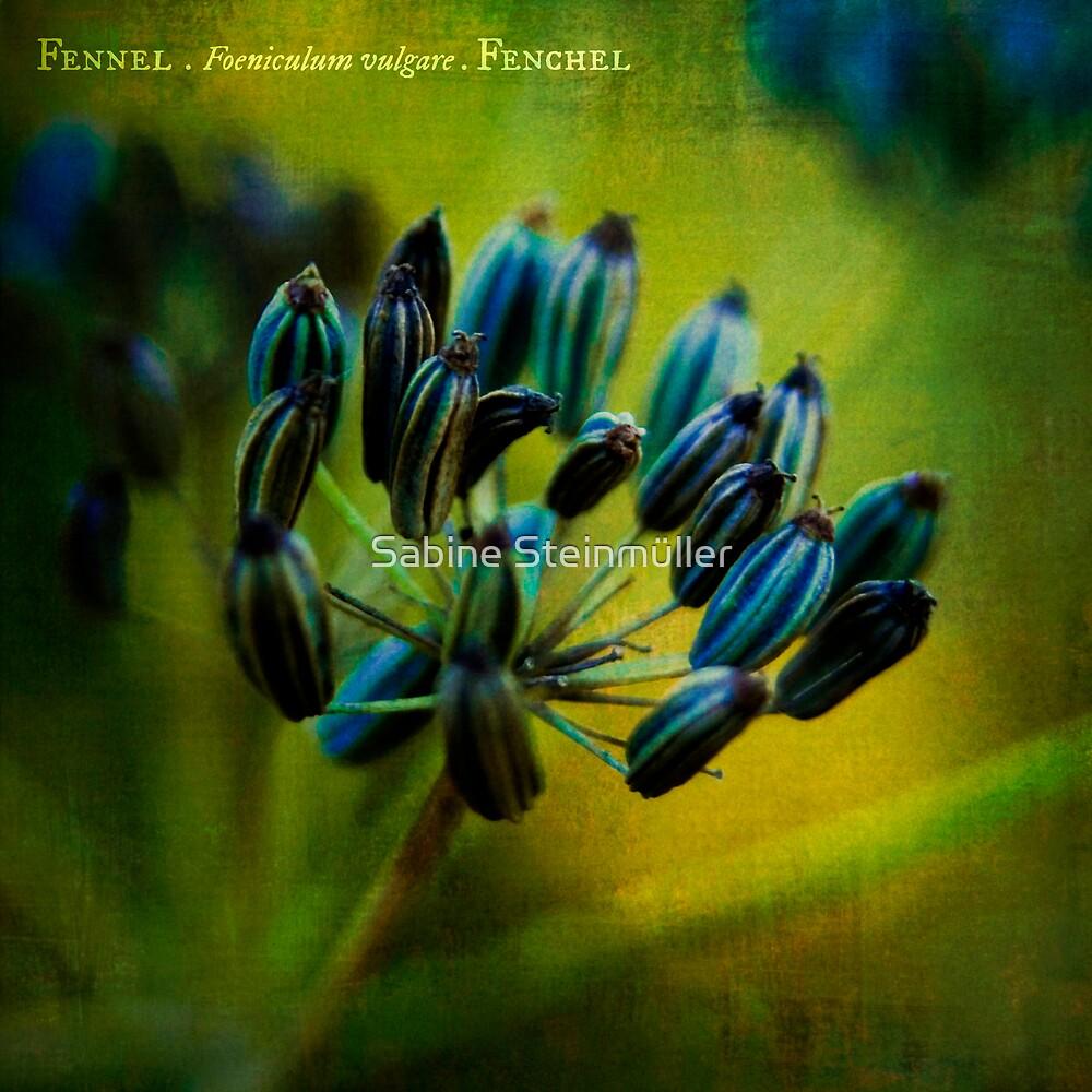 fennel. by Sabine Steinmüller