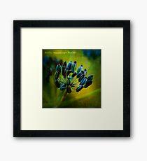 fennel. Framed Print