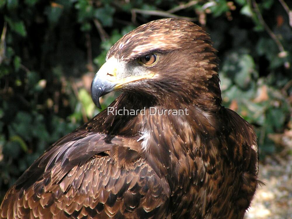 Golden Eagle Portrait by Richard Durrant