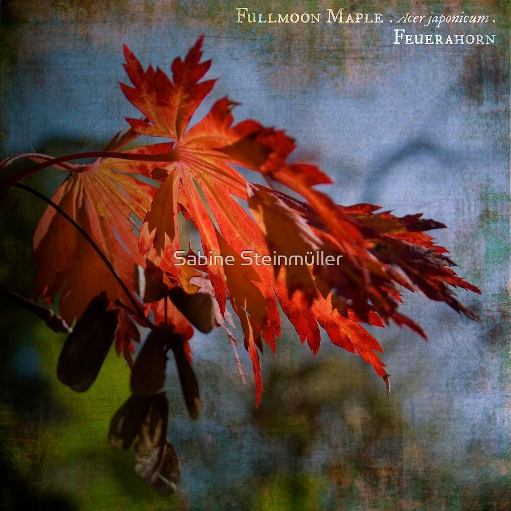 fullmoon maple. by Sabine Steinmüller