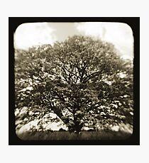 1856 Photographic Print