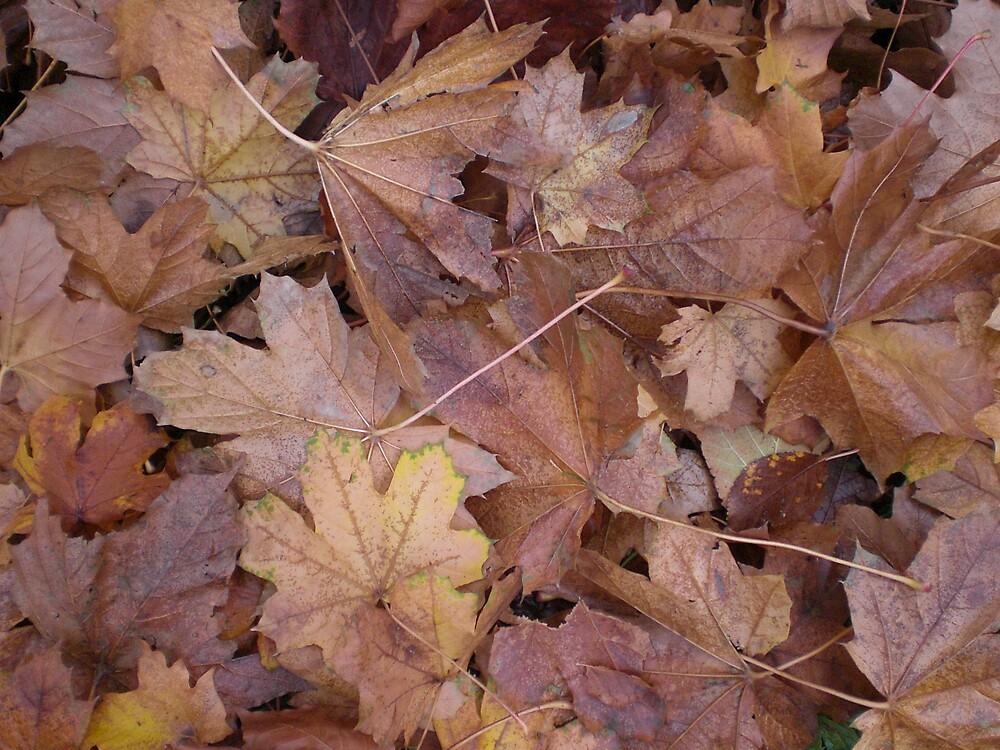 Autumnal days by hannahdugdale