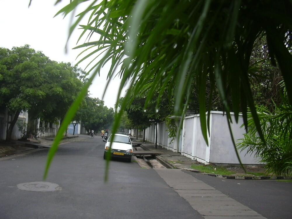 after rain by pugazhraj