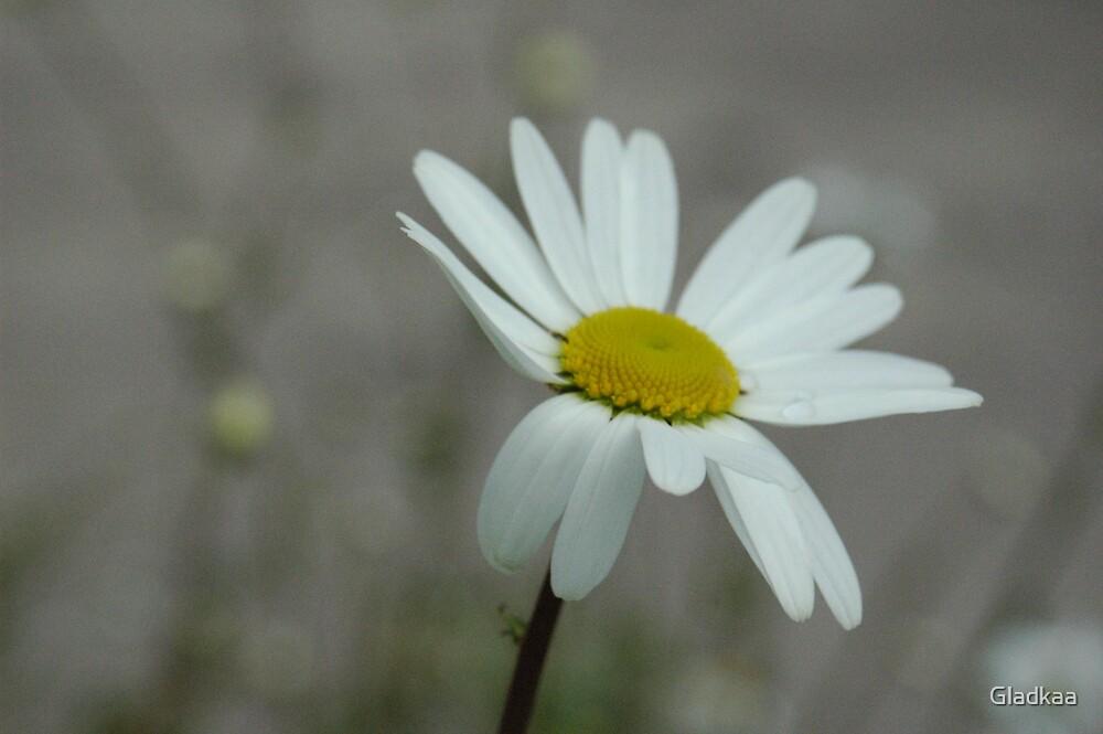 Flower by Gladkaa