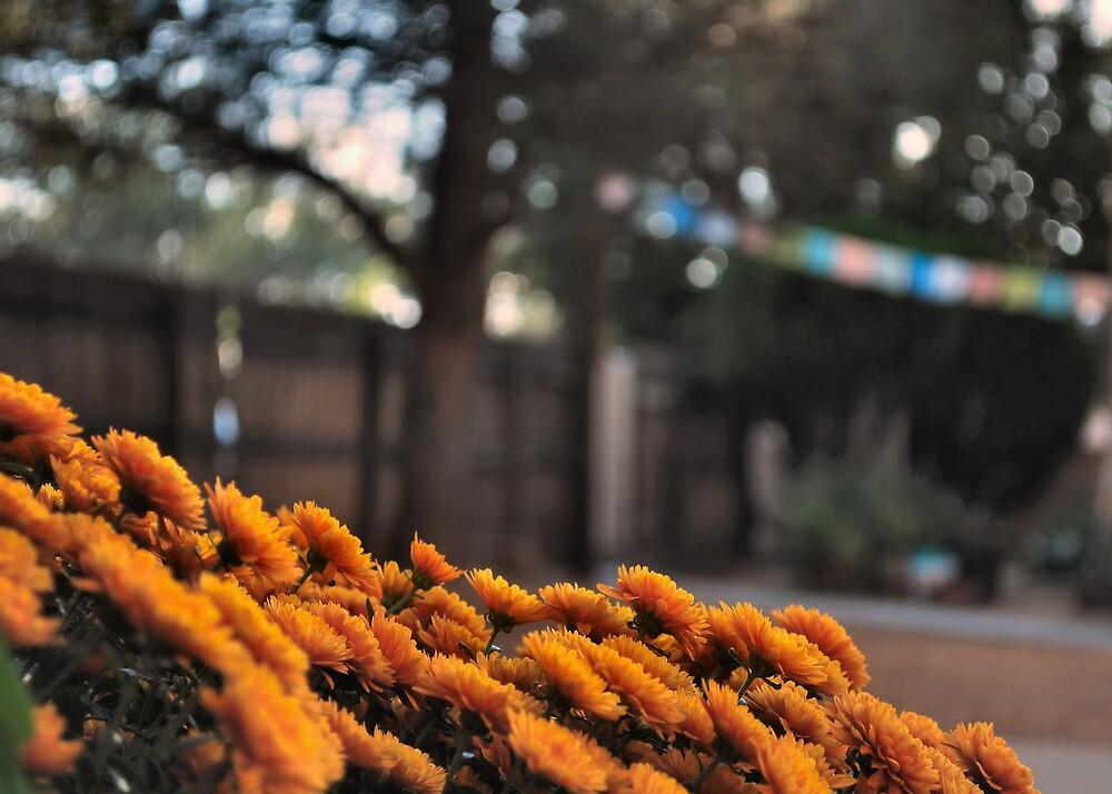 Chrysanthemums and Prayer Flags by James Edward Creamer