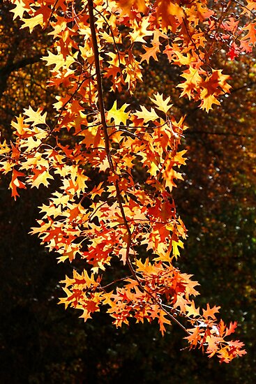 Autumn Leaves by John Wallace