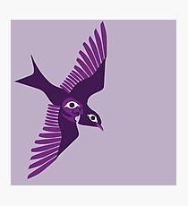 Purple martin Photographic Print