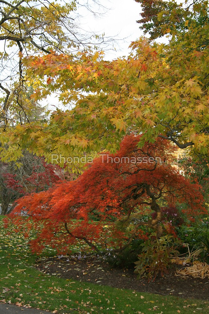 Colours of Fall by Rhonda  Thomassen