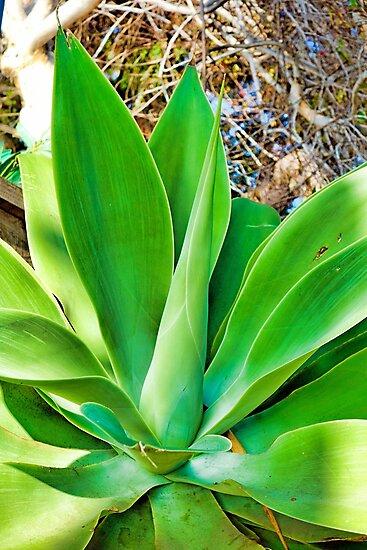 Leaves in Bloom CV by Robert Meyers-Lussier
