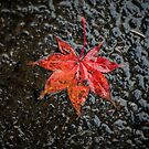 Leaf on Sidewalk by Rubyheart