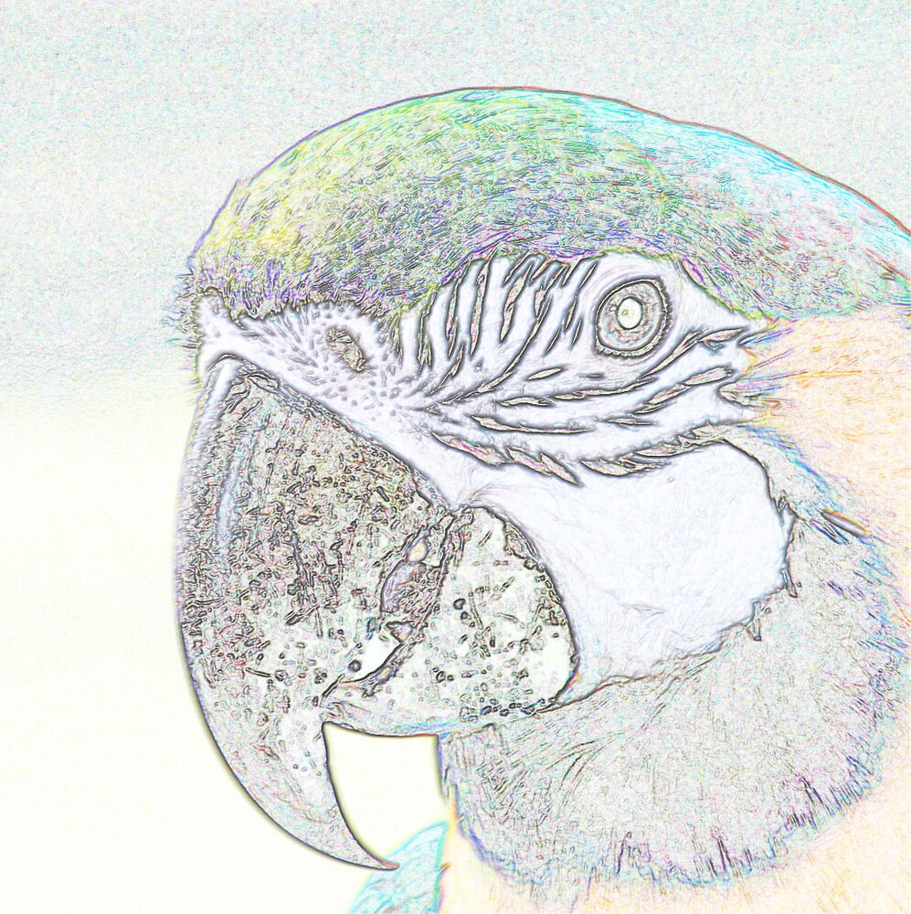 PARROT by BOLLA67