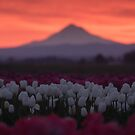 Tulips and Mountain by Rubyheart